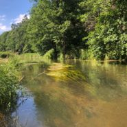 Merkio upėspakrantė